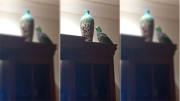 Parrot and a vase is a master class in unconditional love