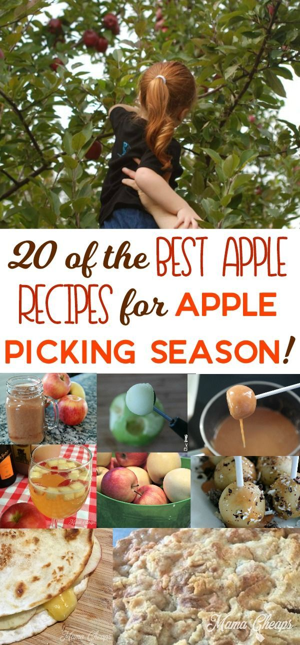 20 of the Best Apple Recipes for Apple Picking Season! http://www.mamacheaps.com/2017/09/best-apple-recipes-for-apple-picking-season.html