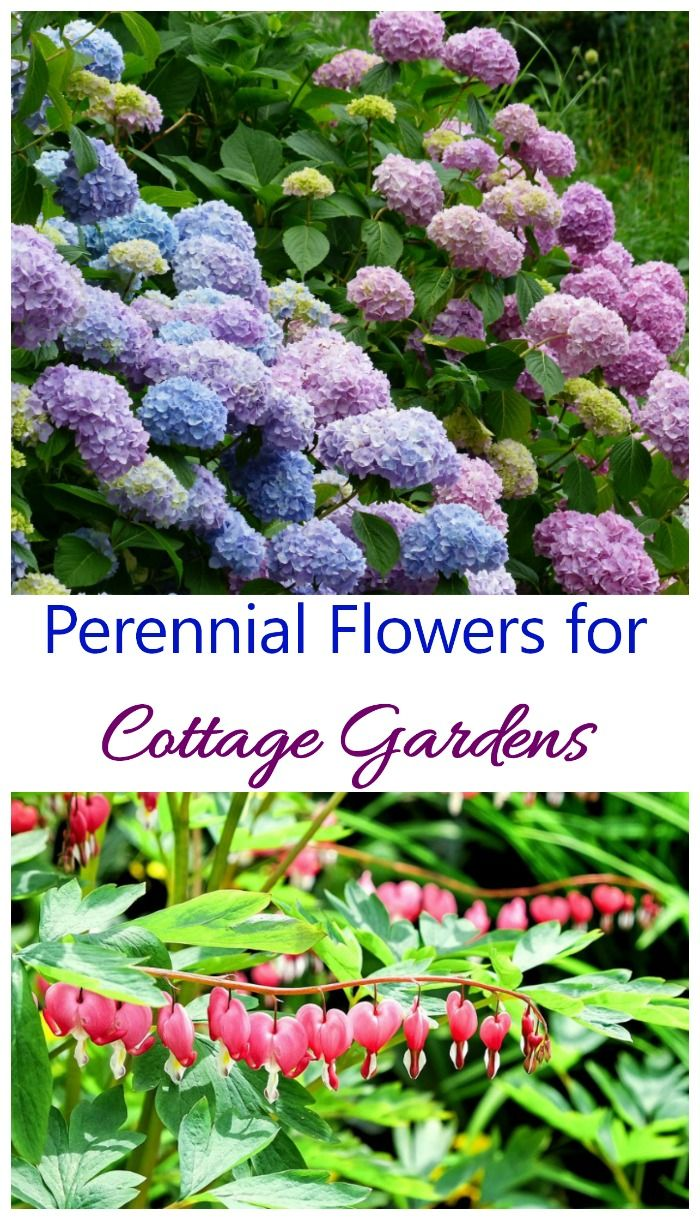 These Perennial Flowers For Cottage Gardens Can Be Planted Once And Will Bloom Year After Year Fall Garden Vegetables Flowers Perennials Cottage Garden Plants