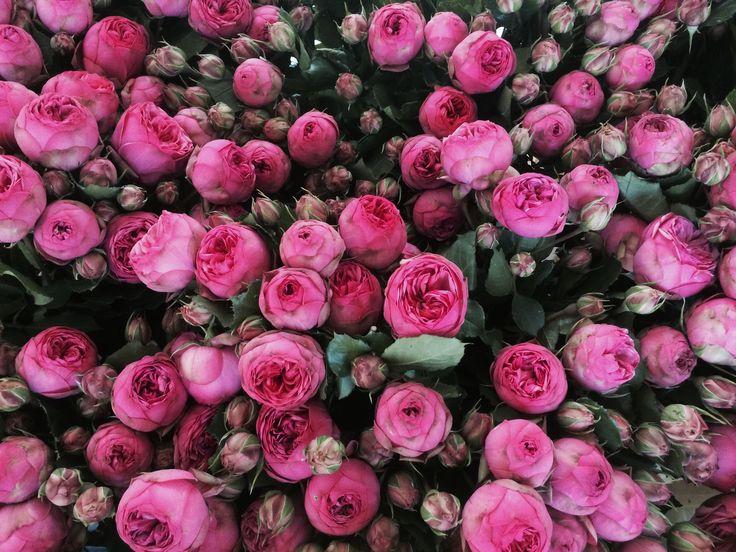 #rosebranchue #rosepiano