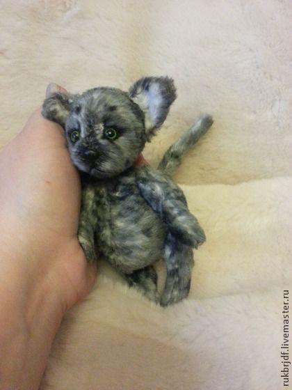 Озорной Котик - серый,котик,котенок,Кошки,котята,котик тедди,друзья тедди