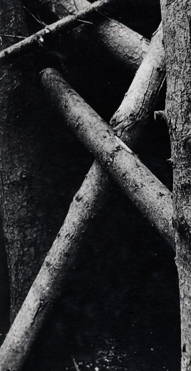 IM WALD, 1986, COURTESY GALERIE FRANÇOISE PAVIOT, PARIS © ANNA & BERNHARD BLUME