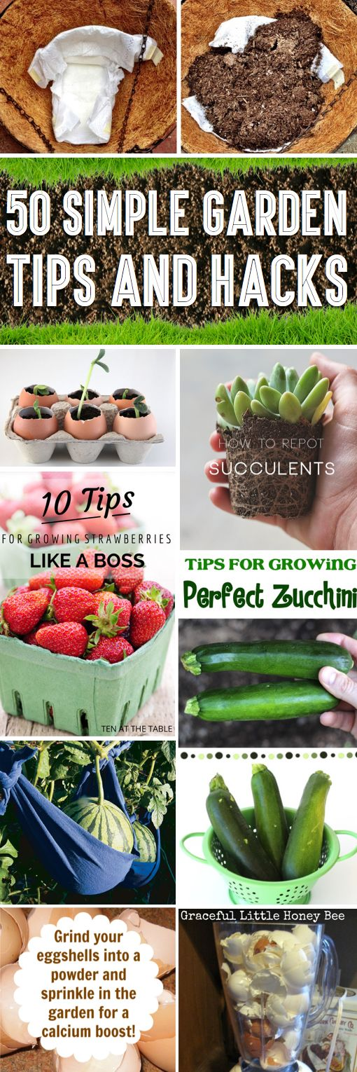 50 Garden Tips And Hacks To Turn You Into A Gardening Expert!