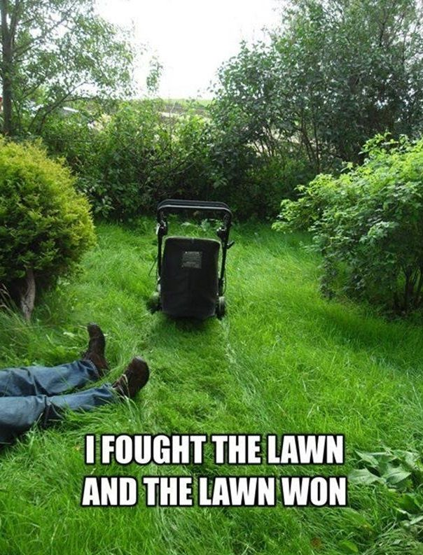 I fought the lawn…