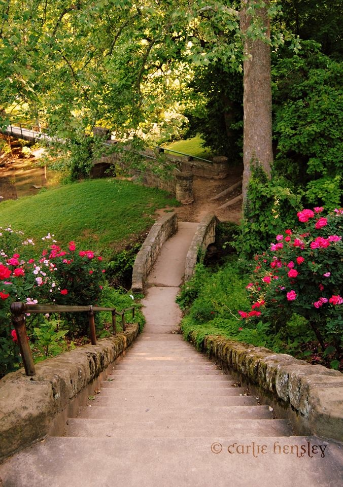 Steps to the Ritter Park Rose Garden
