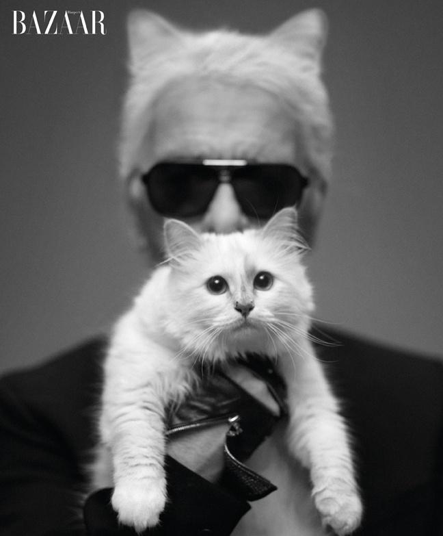karl: Harpers Bazaars, Fashion Design, Karl Lagerfeld, Cat Ladies, Cat Lovers, Kate Moss, Cat Ears, Halloween Ideas, Karl Lagerfeld
