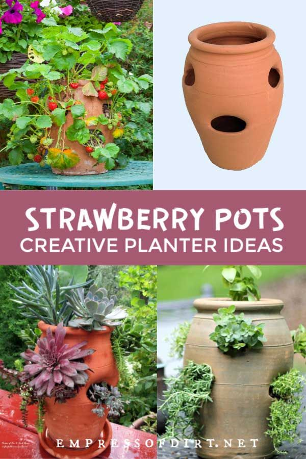 5 Strawberry Pot Planter Ideas Flowers Herbs And Vines Strawberry Pots Herb Garden Pots Strawberry Flower