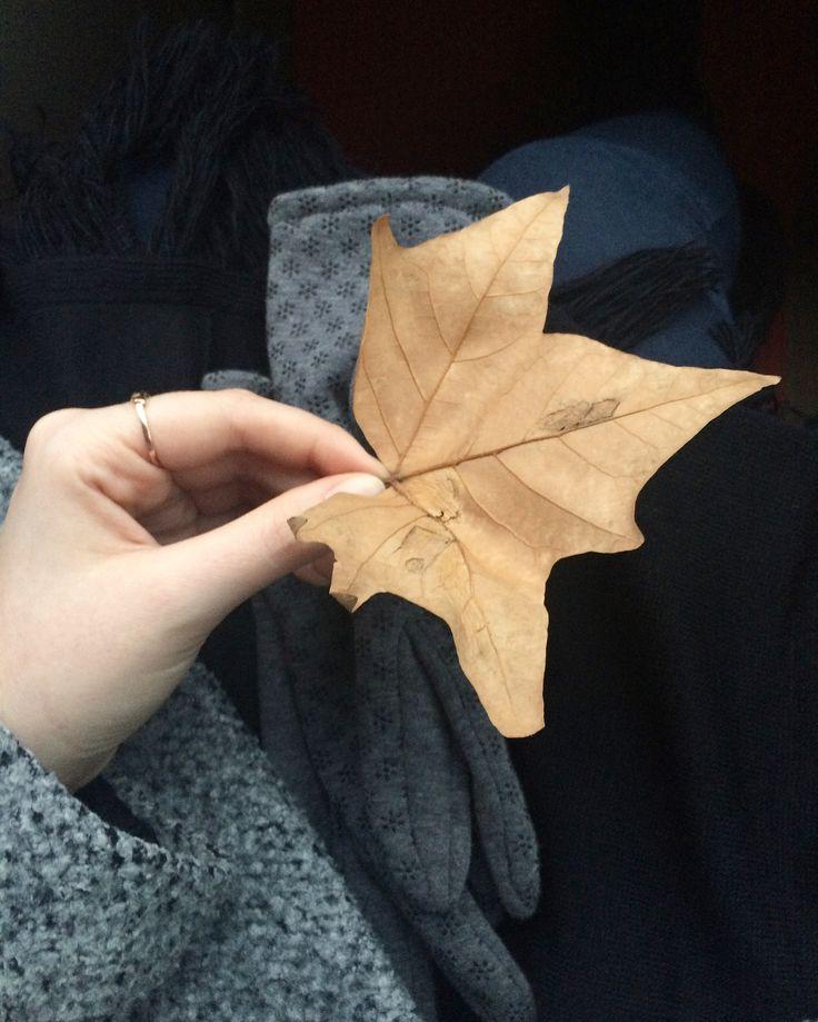 🦊Mutluluk veren yaprak