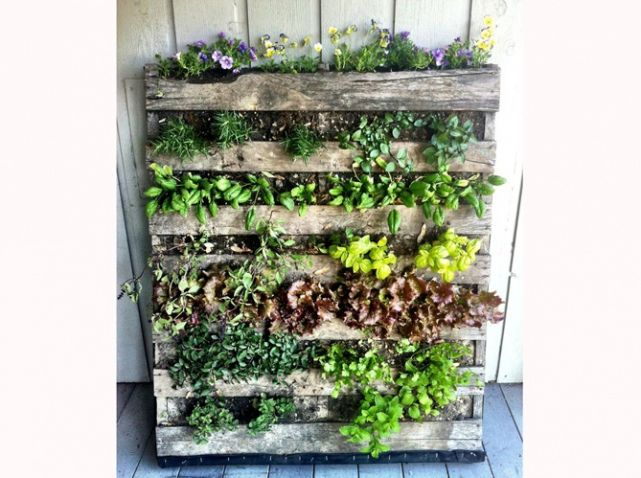 Marion Siccardi palette mur vegetal