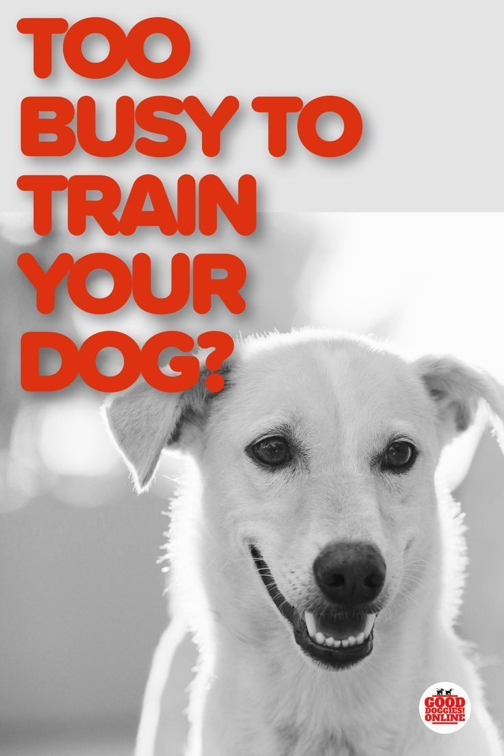 3 Best Dog Training Solutions For Busy Pet Parents Training Your