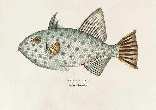 Fish Prints by Soil Design, via Behance 599 x 424