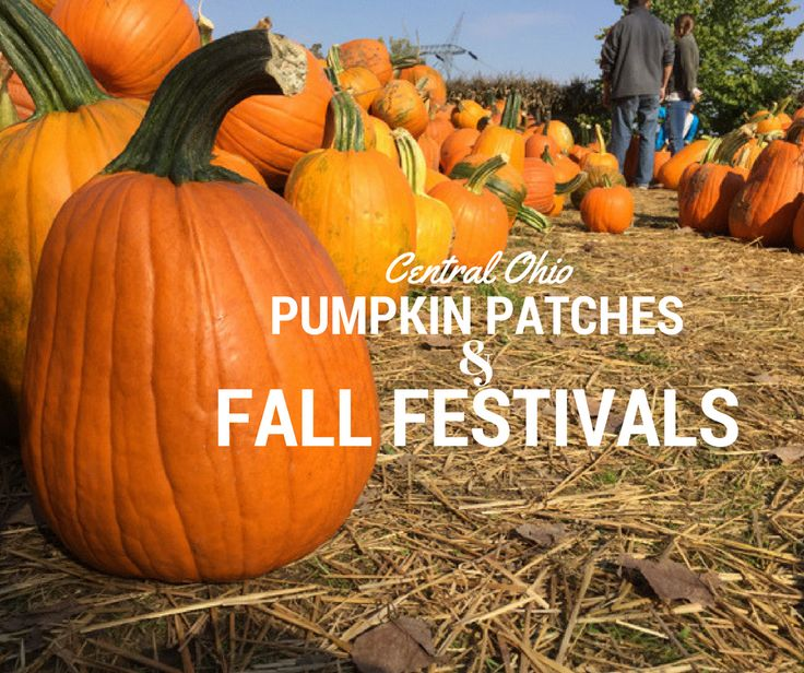 Fall is so fun! Here's a list of area pumpkin patches and farm markets to squeeze in every last drop of this glorious season in Central Ohio! Please check the link for each farm for specific …