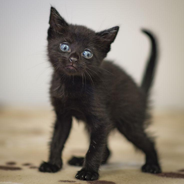 Kitten needs a home - Wood Green Animal Sanctuary
