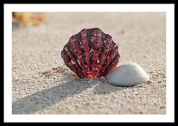 """Framed Print featuring the photograph Fill My Mind by Evgeniya Lystsova.  Bring your print to life with hundreds of different frame and mat combinations. Our framed prints are assembled, packaged, and shipped by our expert framing staff and delivered """"ready to hang"""". #EvgeniyaLystsovaFineArtPhotography #Beach #Travel #Shells #Sand #Prints #Canvas #HomeDecor #InteriorDesign"""