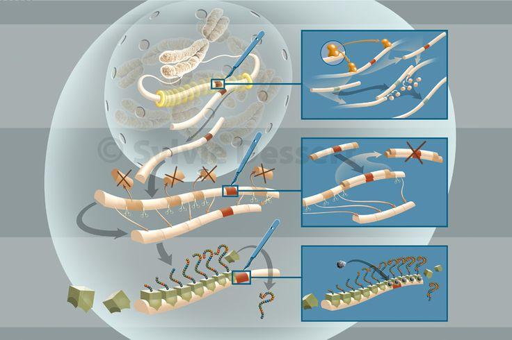 Chirurgie des gènes