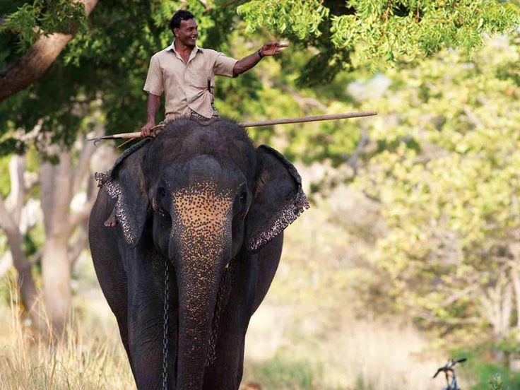 Ulagalla Resort | Anuradhapura, Sri Lanka https://alwayspacked.com/hotels/ulagalla-resort-sri-lanka?utm_content=buffer71083&utm_medium=social&utm_source=pinterest.com&utm_campaign=buffer #AlwaysPacked