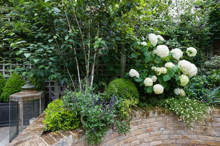 Planting in a small space. Garden designed by Karen Rogers @krgardendesign.com