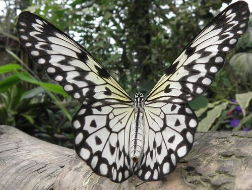 Vlindertuin Vlinders aan de Vliet: Vlindertuin Vlinders, Vlinders Aan
