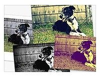 Picasa effects and filters.
