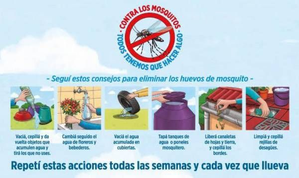 ¿Cómo prevenir el zika, dengue y chikungunya?