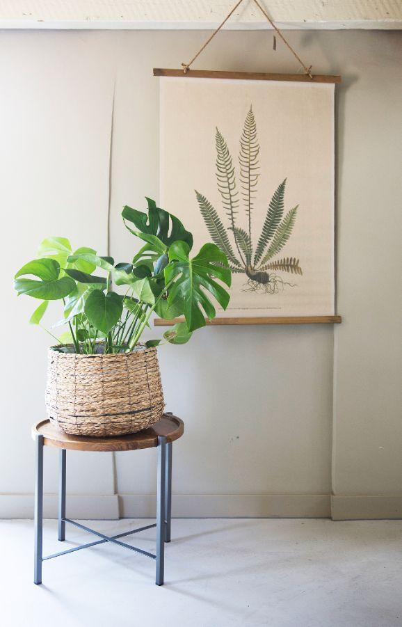 Trendhopper ● Betonvloer met groen grijze muur en aan de muur een wanddecoratie met een oude vintage schoolposter met planten. Op de voorgrond kruk / bijzettafel Rapale met mand van zeegras en groene plant.