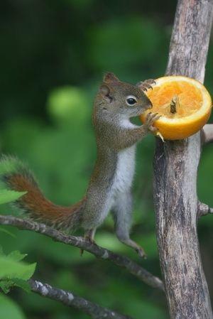 squirrel-If-I-Stttreeechhh....