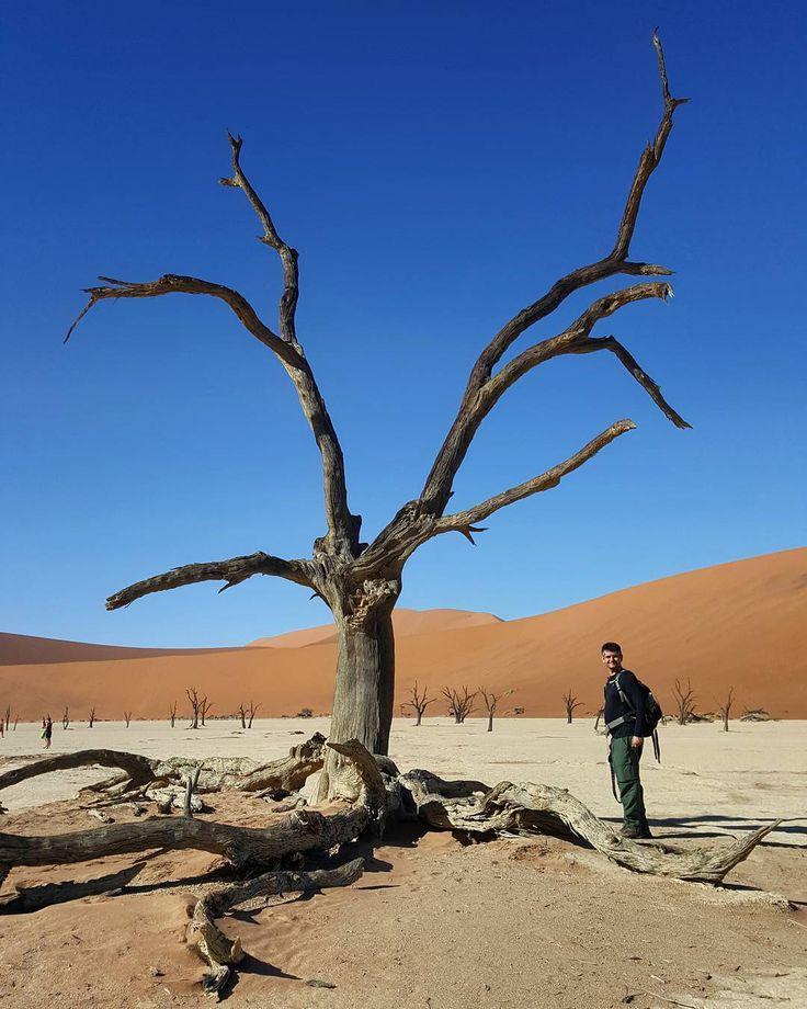 Um dos lugares incríveis que visitamos na Namíbia foi o Deadvlei. Uma planície de argila com árvores secas que estão lá há mais de 900 anos.  #NerdsNaNamíbia  #namibia #africa #landscape #nature #travel #viagem #beautifuldestinations #bestvacations