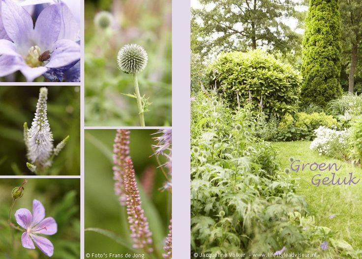 Album pag. 3  - Weelderige, romantische stads tuin met blauwe, witte en lila bloemen. Urban Oasis. Romantic garden. Design: ©Jacqueline Volker www.lifestyleadviseur.nl Image: Frans de Jong.