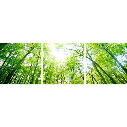 The Canvas Art Factory Sun Through Trees Triptych (Set of 3)