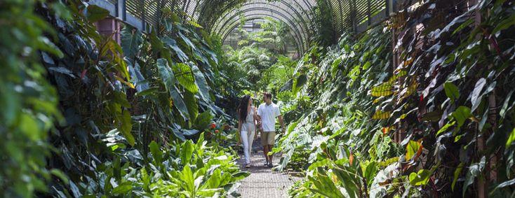 Puerto de la Cruz. Jardín Botánico : tlj 9h-18h. 3€. Superbe jardin crée au XVII ème siècle - Richesse des essences dans un site très bien entretenu. Minimum 1h ...