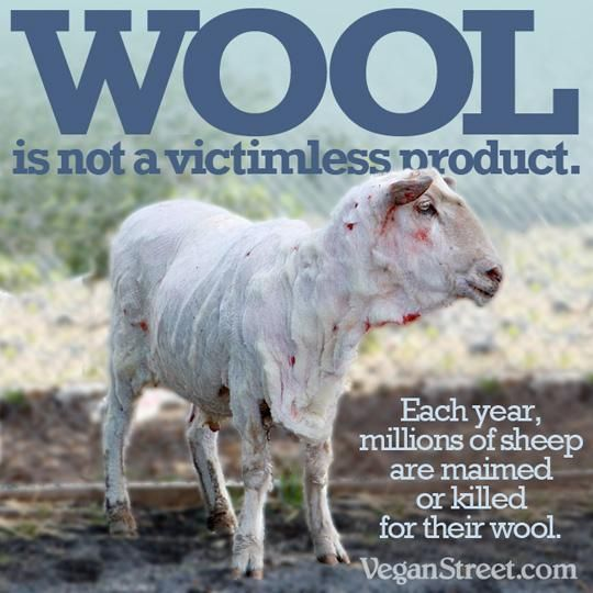 wool is not a victimless product. Each year, millions of sheep are maimed or killed for their wool. Don't support this industry! GO VEGAN