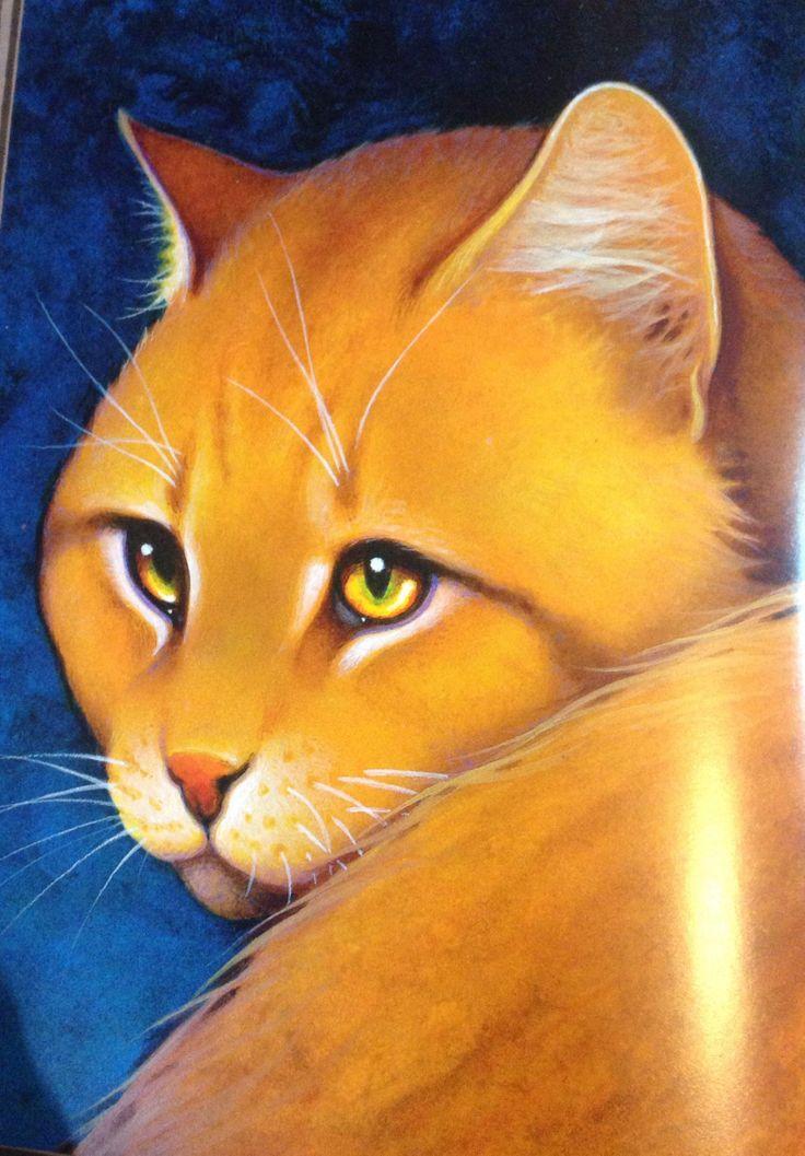25 Best Images About Lionblaze On Pinterest Cats