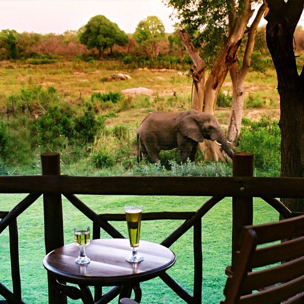 Pool bar overlooking the African bushveld.