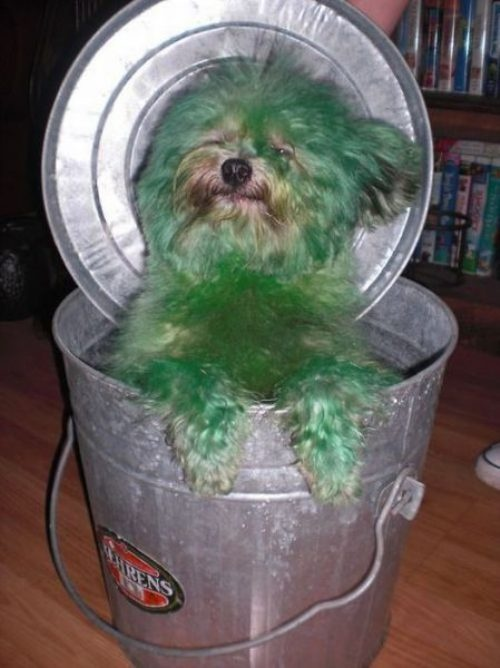 squeeeeeeDogs Oscars, Laugh, Poor Puppies, Halloween Costumes, Crazy Animal, Funny Stuff, Grouch Dogs, Funny Animal, Oscars Thedog