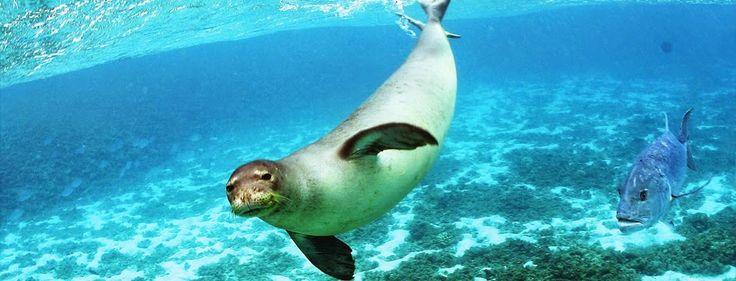 The National Marine Park of Alonissos, Europe's largest protected marine area