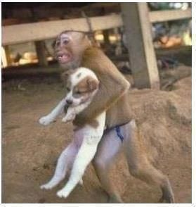 during a dangerous factory explosion that occurred in china, a monkey was recorded on the camera saving a puppy from the explosion site. he held the dog as he ran out of the factory.  if animals can instinctivley show compassion and kindness to each other, so can we