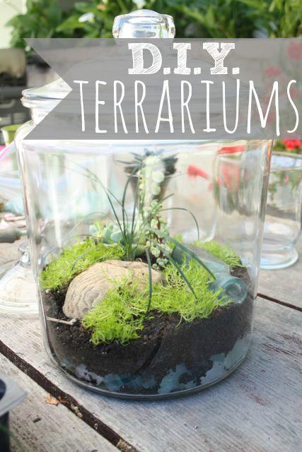 DIY terrariums via the pleated poppy