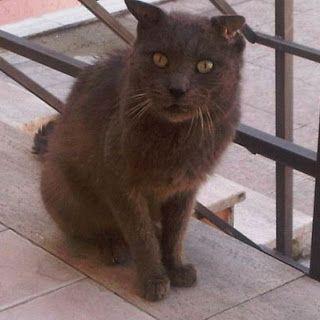 GREY è solo da sempre... ora è anziano e malato, non può restare per strada! http://adottaungattoanziano.blogspot.it/2012/04/grey-e-solo-da-sempre-ora-e-anziano-e.html