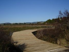 Walkway - Waikarea Estuary - this is supposed to be a good place for a bike ride....need to hire a bike though ;/