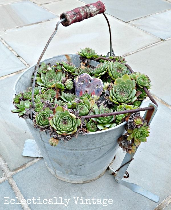 Eclectically Vintage garden unique plants, succulent bucket.