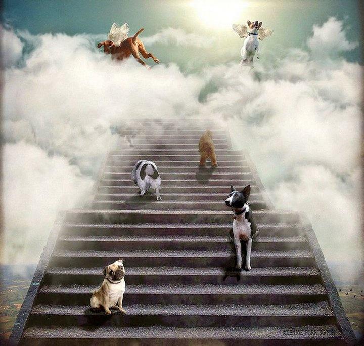 All dogs go to heaven Randomness Pinterest Heavens
