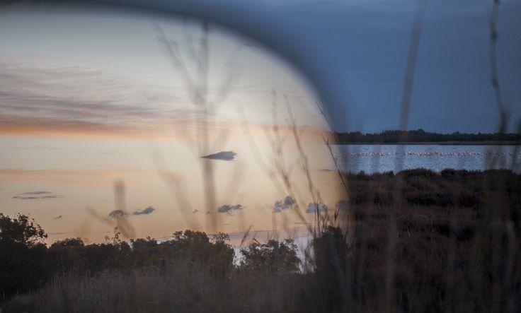 S'Ena Arrubia, Arborea (OR). Fenicotteri. Ultima foto della giornata, dal finestrino della macchina. 26 gennaio 2015