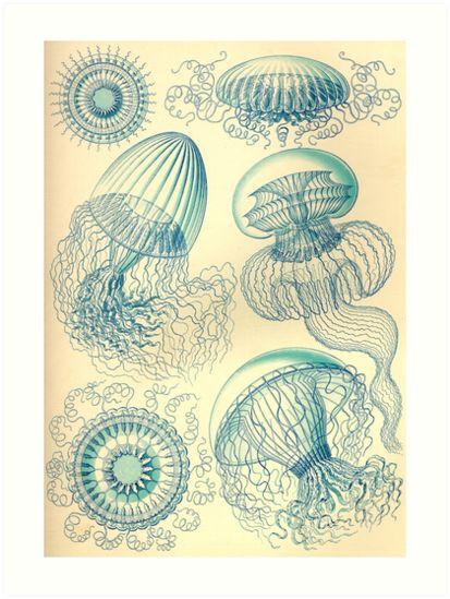 Leptomedusae - Ernst Haeckel  by billythekidtees