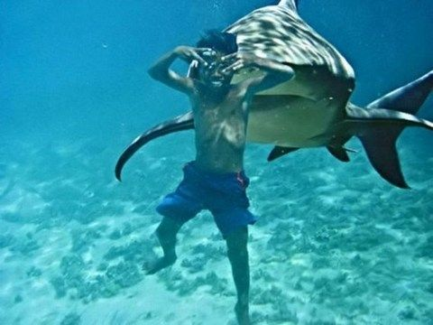 Sharks Eating People | Shark attacks in Mexican resort of ...