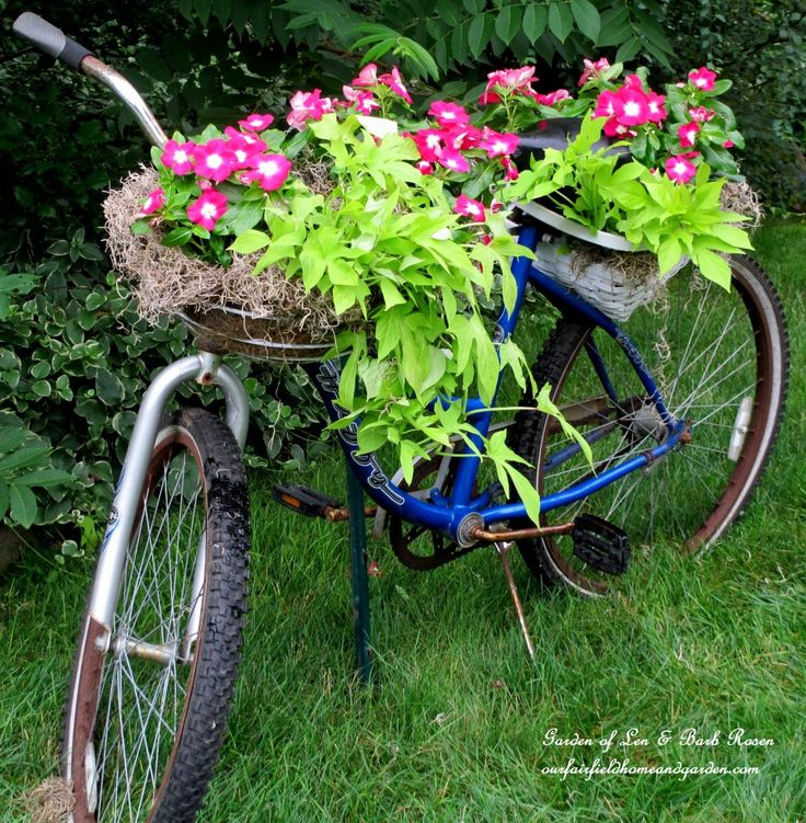 Give Your Backyard A Makeover With a 5 Dollar Repurposed Bycycle Planter And Flowering Container Garden Recipe !