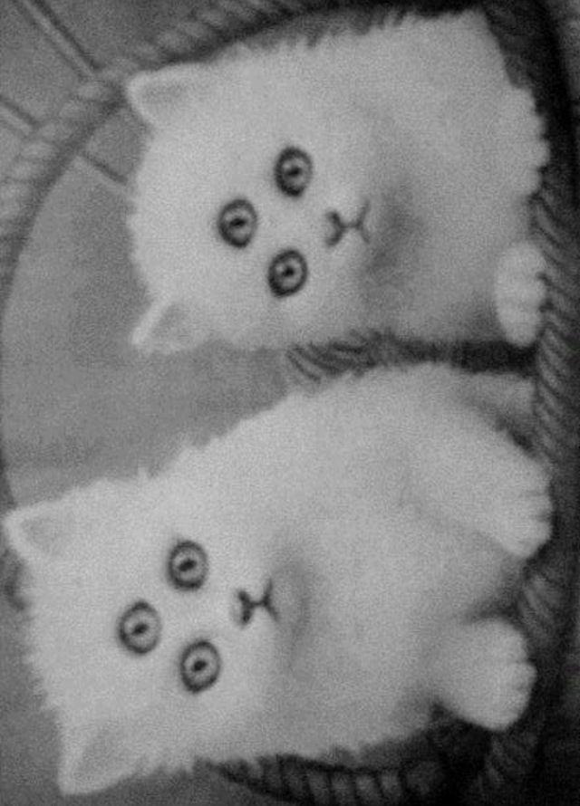 Gatos mutantes