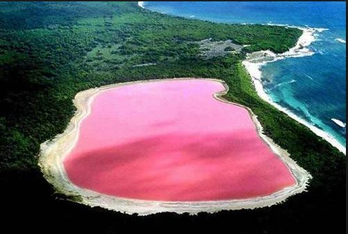 Lake Hillier, Australia   via universomarino I had to find out what makes Lake Hillier this amazing pink color. The information below is from Wikipedia - The only living organisms in Lake Hillier are microorganisms including Dunaliella salina, which causes the salt content in the lake to create a red dye which helps produce the colour, as well as red halophilicbacteria present in the salt crusts.