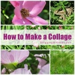 How to Make a Photo Collage (now that Picnik is gone).