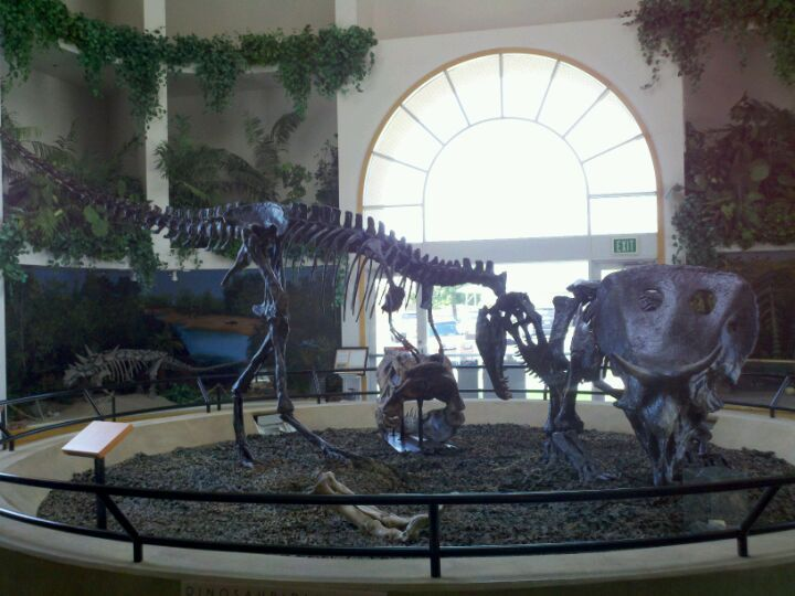 The Museum of the San Rafael in Castle Dale tells stories of a primitive past long buried under shifting soils. A replica of a fossilized dinosaur egg believed to contain an embryo is part of the collection, as well as skeletons of Allosaurus, Chasmosaurus, Albertosaurus and the great skull of Tyrannosaurus rex. 435-381-5252, www.castlecountry.com