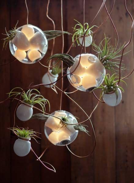 pendant-light-plant-terrarium-indoor-garden (3)